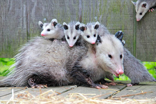 mother and babies
