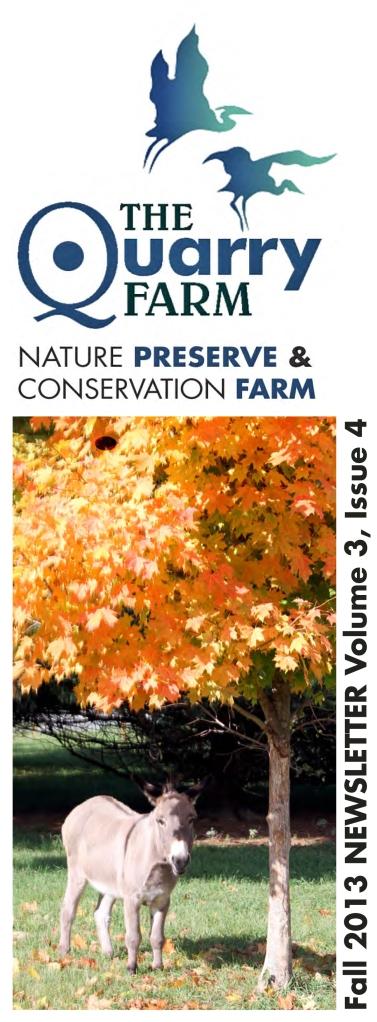 2013 Fall Newsletter-2