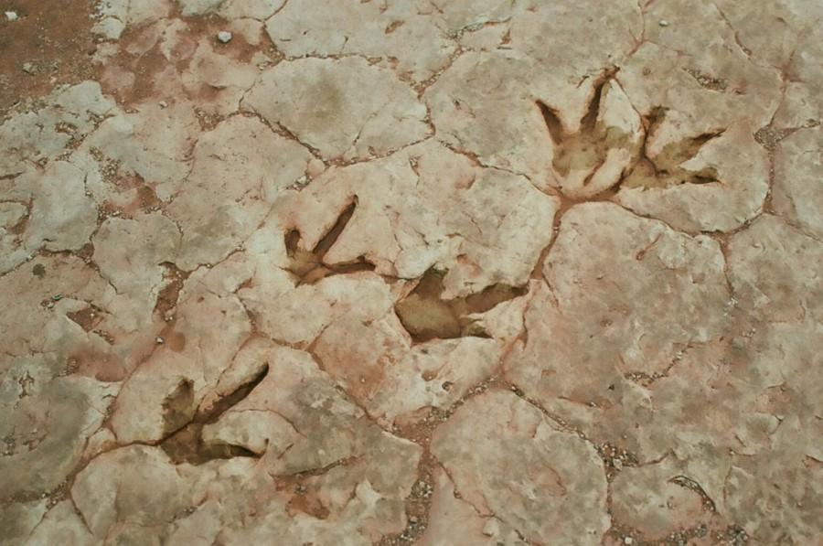 Dinosaur tracks Tuba City AZ