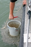 Silt plumes from a lake bottom sample off Put-in-Bay