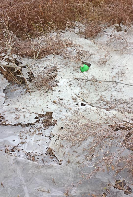 green-bottle-in-ice