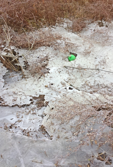green-bottle-in-ice